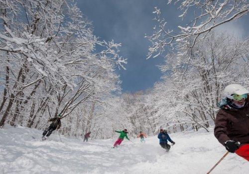 Fun and adventure in Niseko's famous powder.